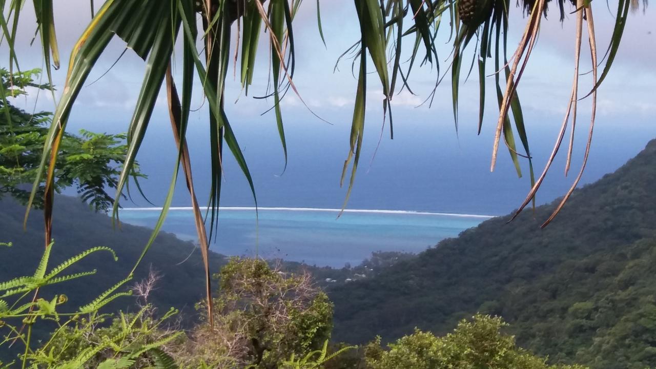 Maravillosa Polinesia