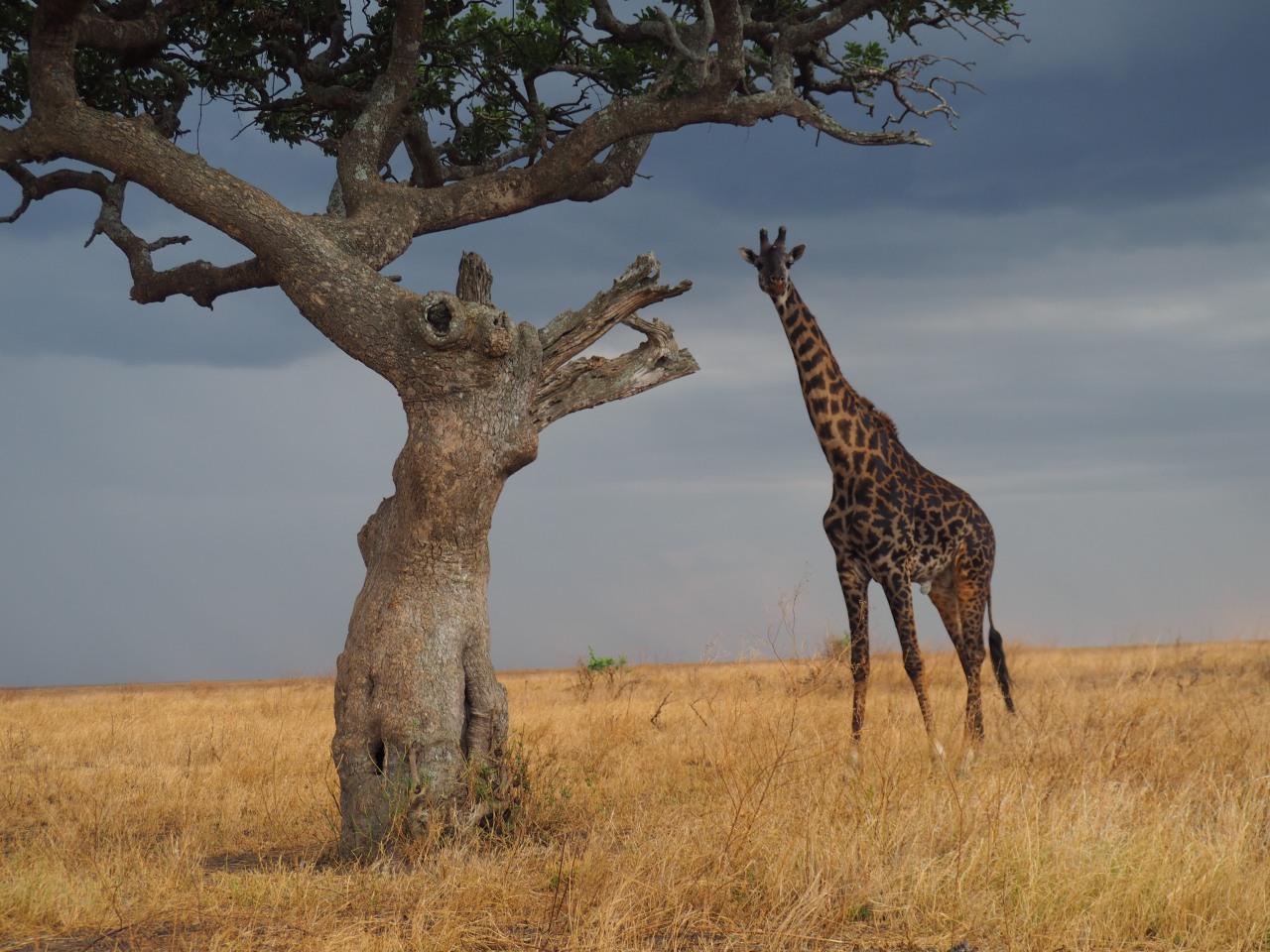 Nuestro destino en Africa-TANZANIA